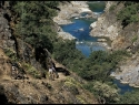downieville-trail-with-river